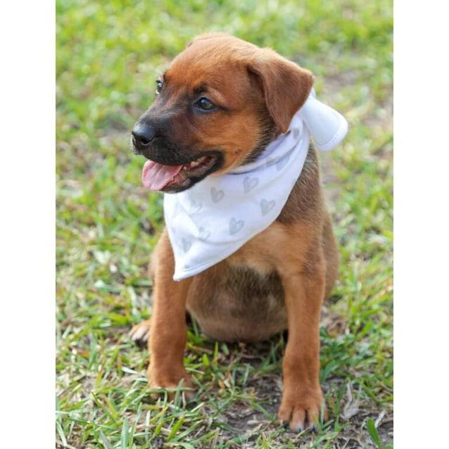 Photo of Sophia ~ Kelpie X Puppy (On Trial 17/2/20)