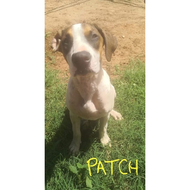 Photo of Patch