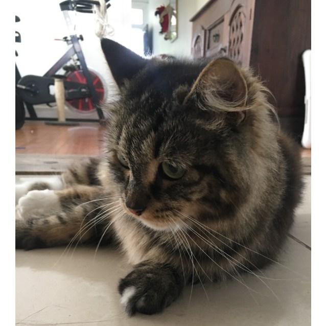 Photo of Blinky