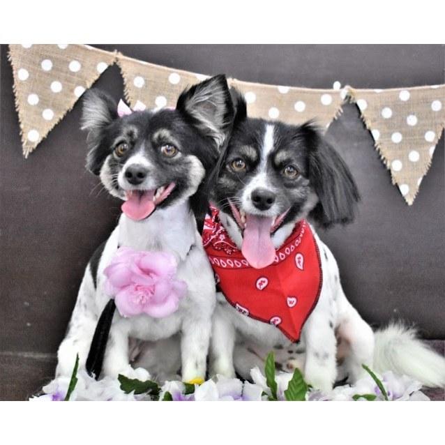 Photo of Millie & Monty