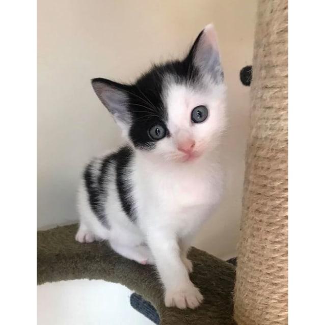 Photo of Iggy ^^Dandy Cat Rescue^^