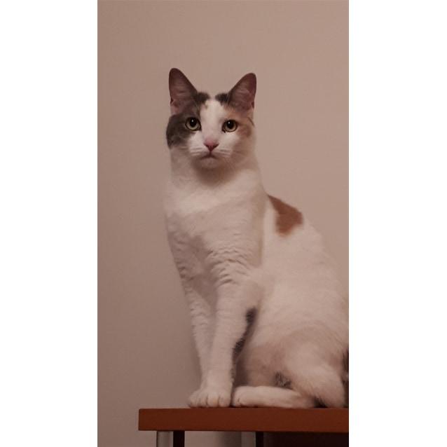 Photo of Tiga