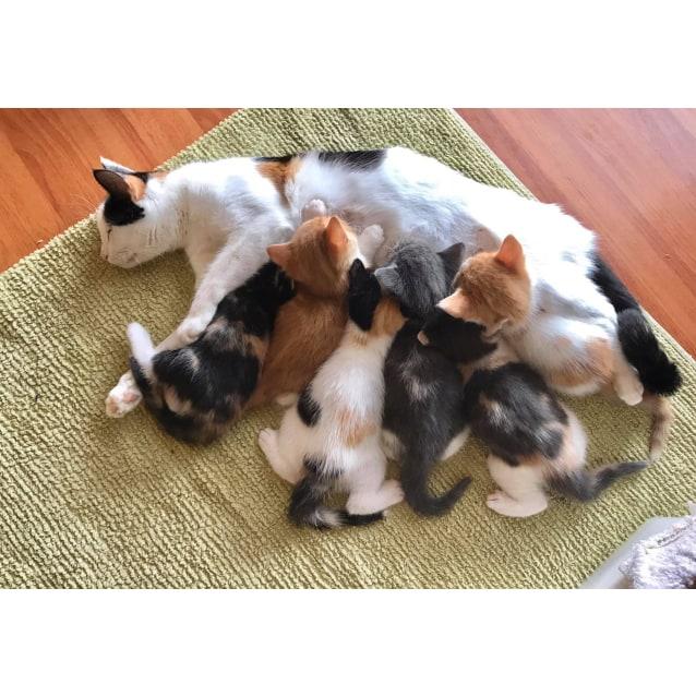 Photo of Stan ^^Dandy Cat Rescue^^