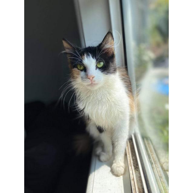 Photo of Leona (Located In Frankston)