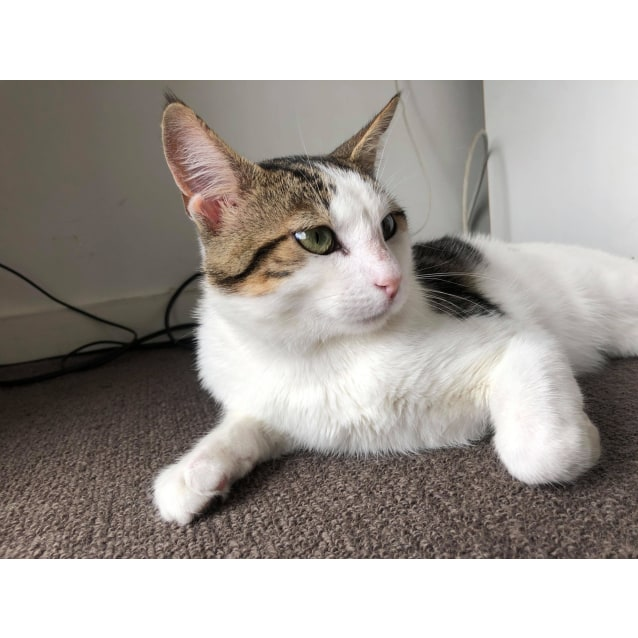 Photo of Pippi (Located In Hawthorn)