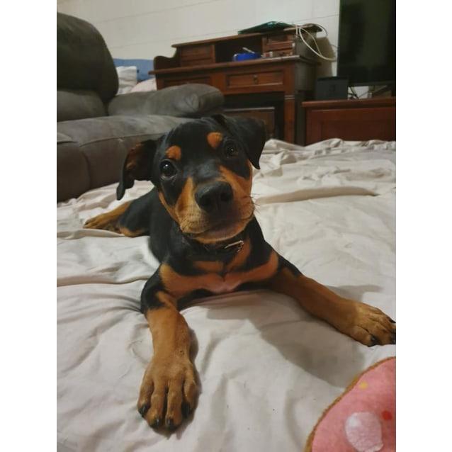 Photo of Peewee