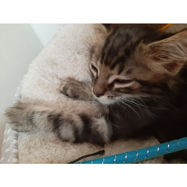 Photo of Maxie