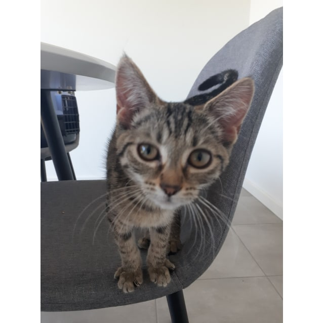 Photo of Coco (Located In Lynbrook)