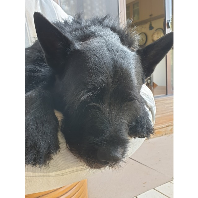 Photo of Mr Fox