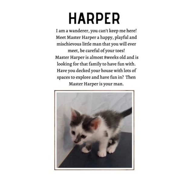 Photo of Harper