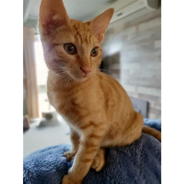 Photo of Jughead