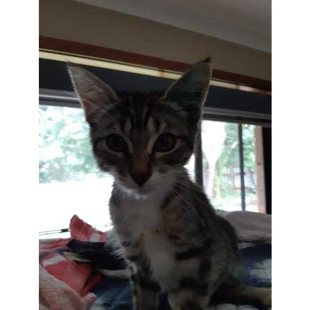 Photo of Gladys
