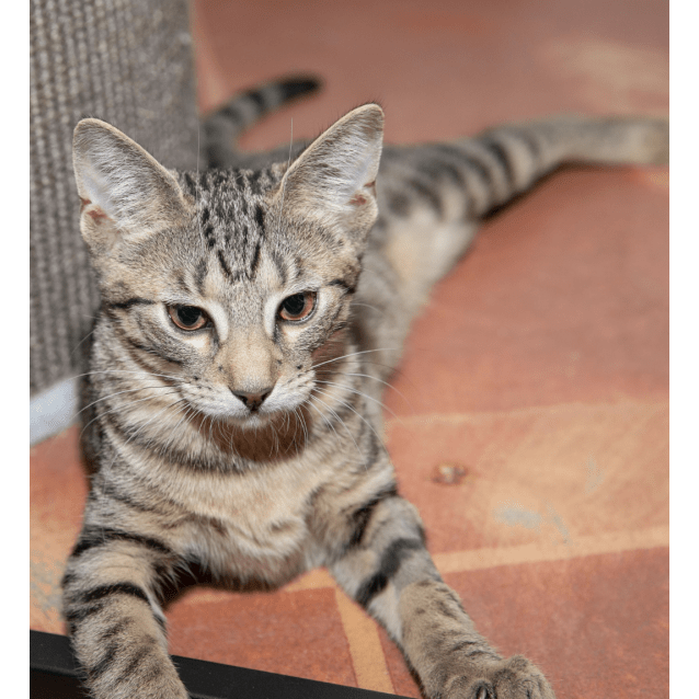 Photo of Pumpkin   Visit Me At Cat Whispurr Cafe Fremantle!