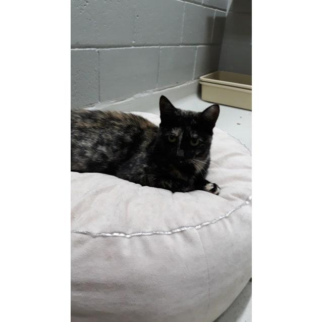 Photo of Maud