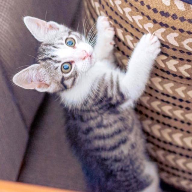 Photo of Ajax