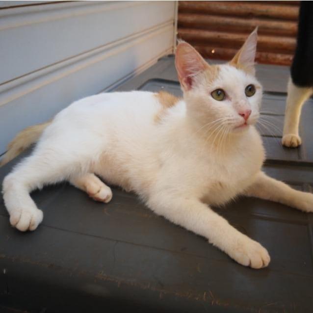 Photo of Moochie
