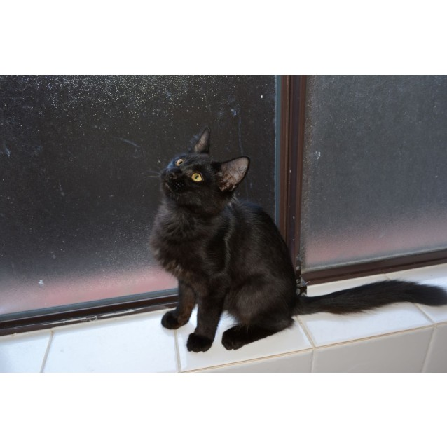 Photo of Luci Purr
