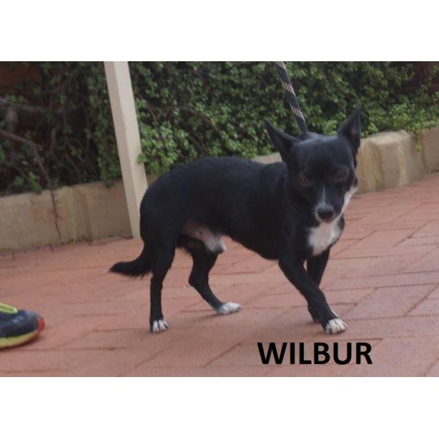 Photo of Wilbur