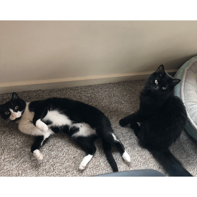 Photo of Oreo And Lily