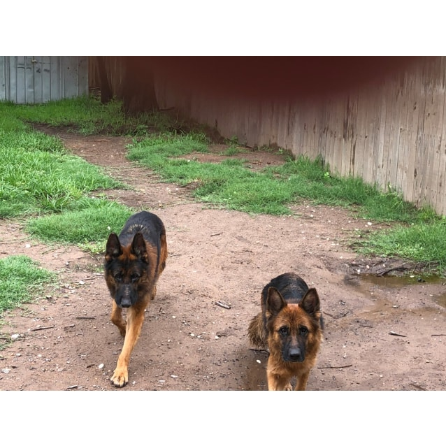 Photo of Dodge And Gypsy