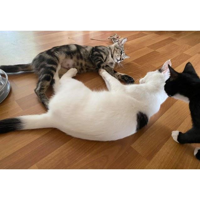 Photo of Wolfgang & Mum Cat