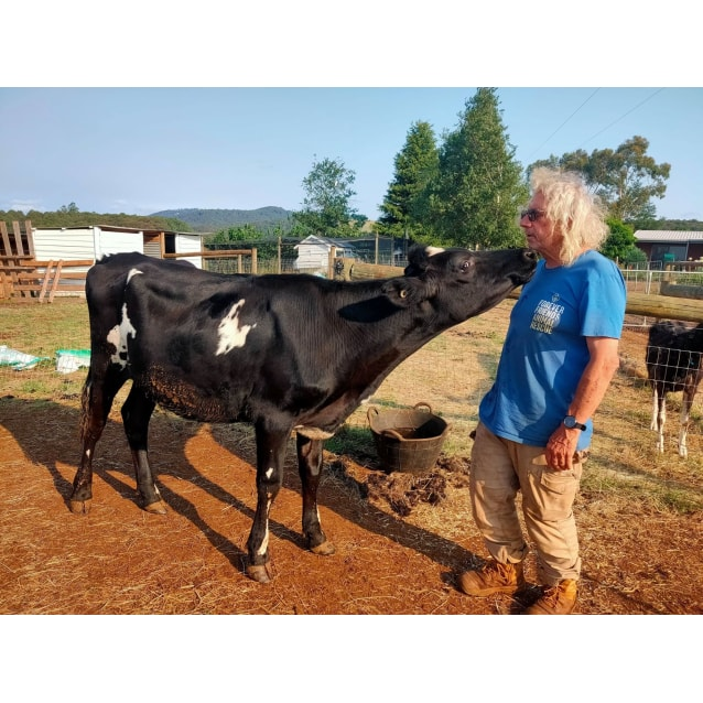 Photo of Sweet Sally   Cuddly Cow!