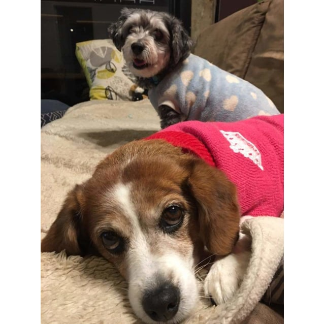 Photo of Mercedes And Buddy