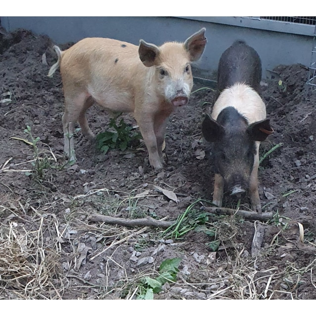 Photo of Arthur And Douglas
