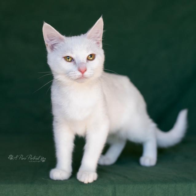 Photo of Marshmellow