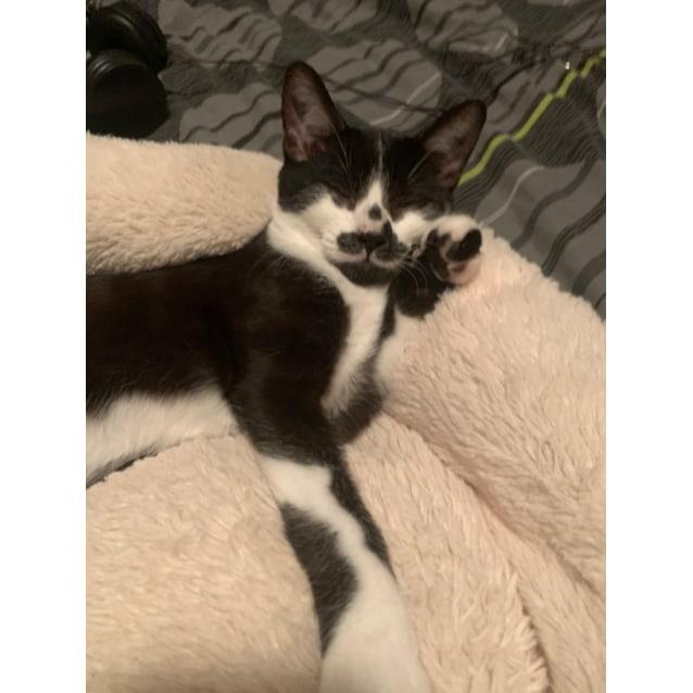 Photo of Zorro