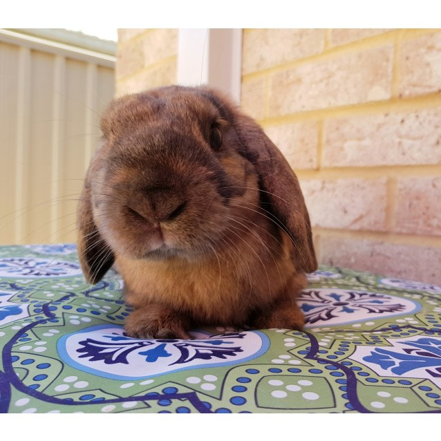 Photo of Floyd *On Trial*