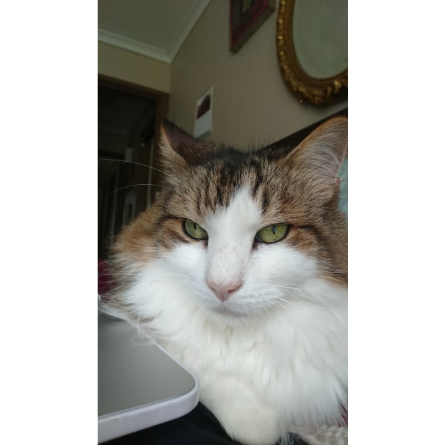 Photo of Winkle (Located In Boronia)