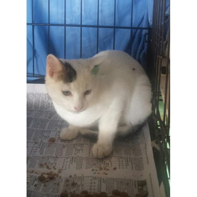 Photo of Kitty Kitty