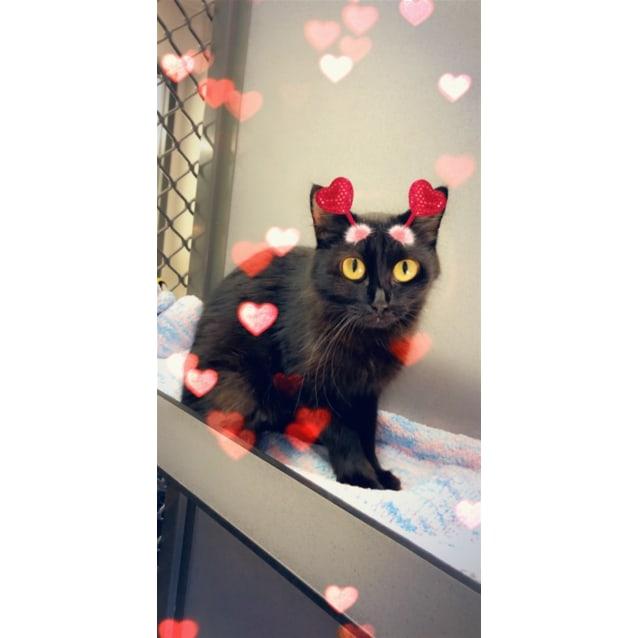 Photo of Zeva