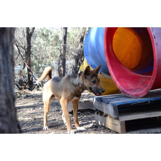 Photo of Jurra  Dingo