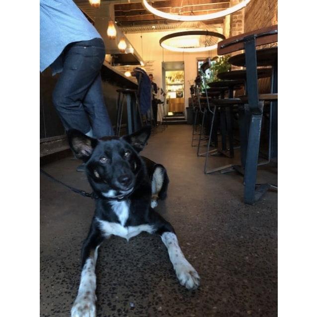 Photo of Onyx   Dingo