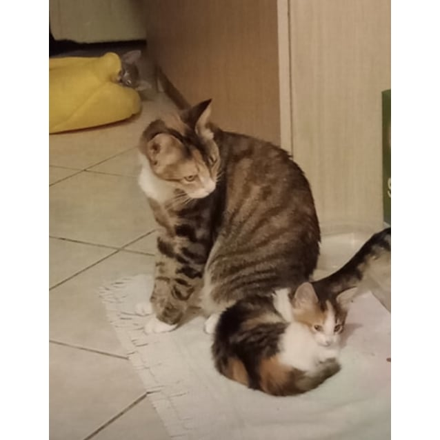 Photo of Nellie & Rona