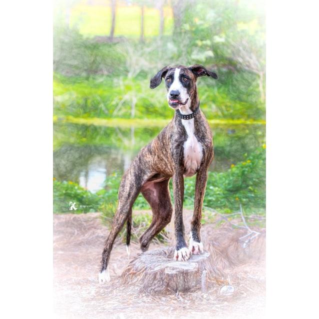Photo of Stella 💓💓💓