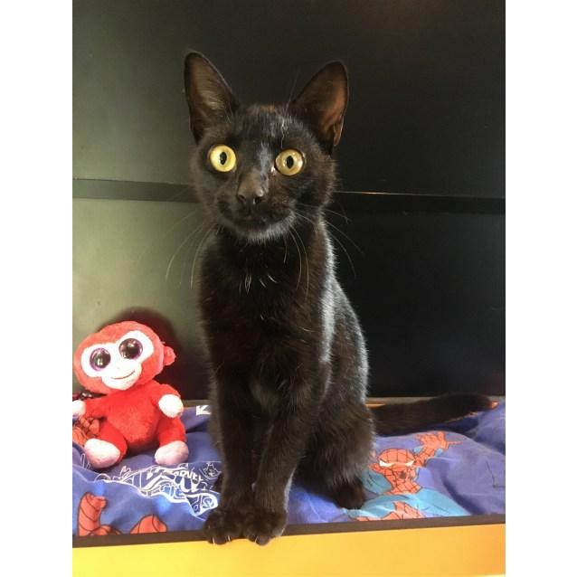 Photo of Missy