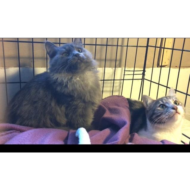 Photo of Mazo & Nixie (Located In Frankston)