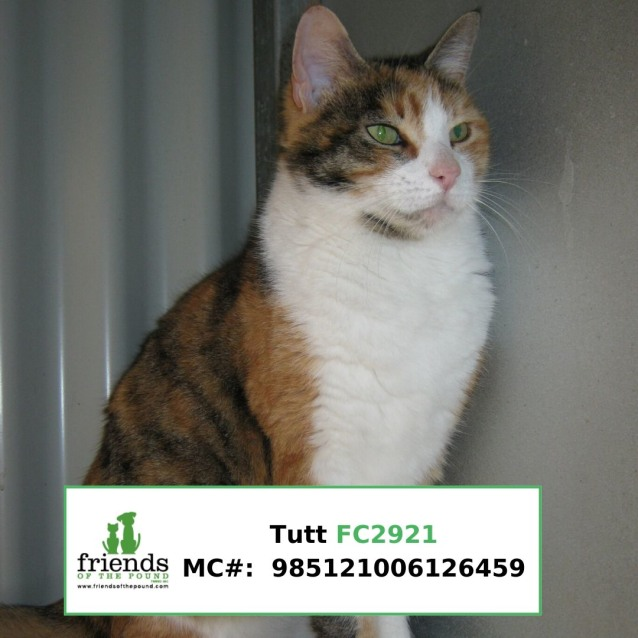 Photo of Tutt