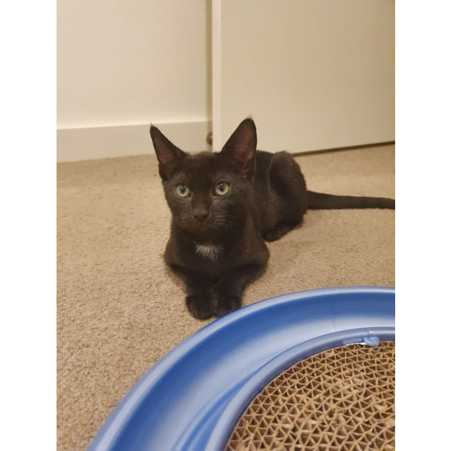 Photo of Maleficent