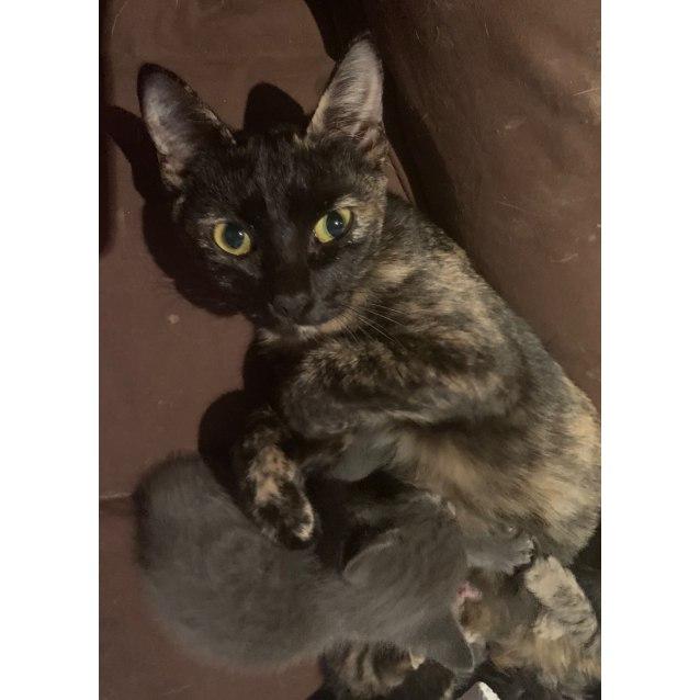 Photo of Mila