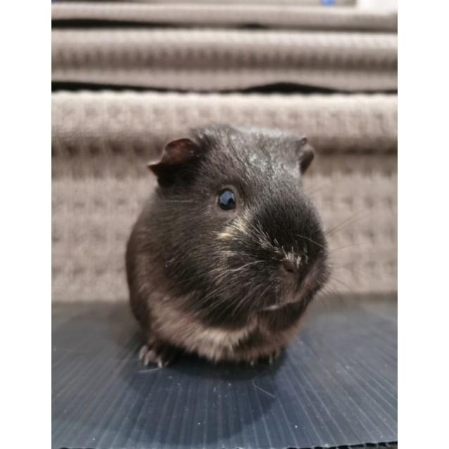 Photo of Brownie