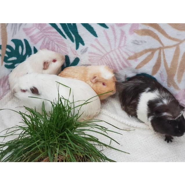 Photo of Mango (Buddies With Silvia, Tubbykins, & Spootle)