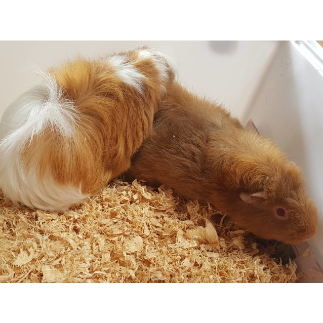 Photo of Nibbles (Buddy Of Squeak)