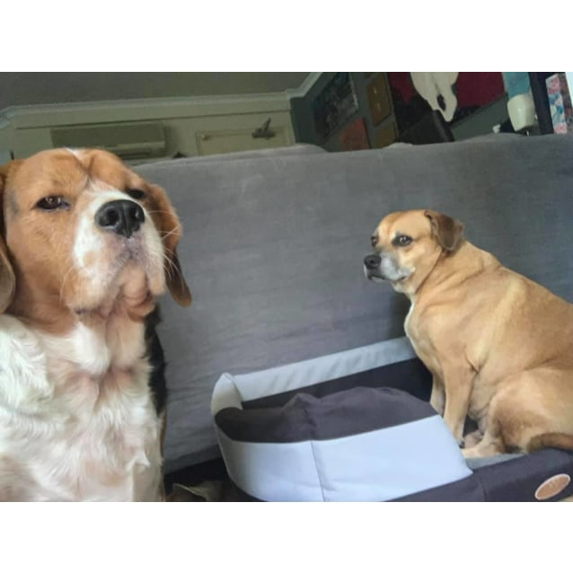 Photo of Scooby And Shandie