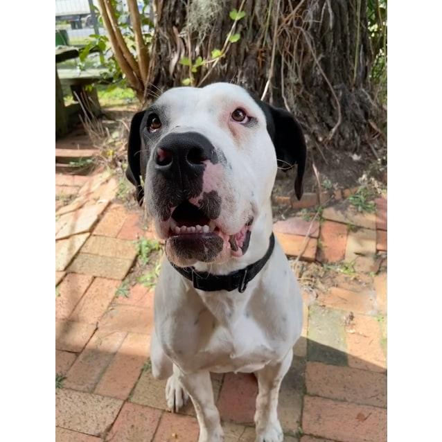 Photo of Smiley ~ $150 Adoption Fee ~
