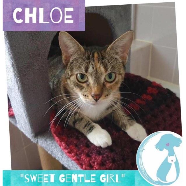Photo of Chloe