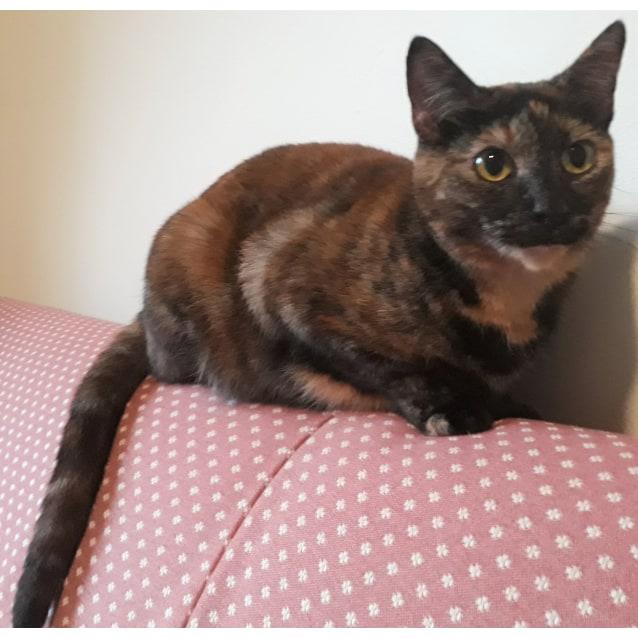 Photo of Esmeralda
